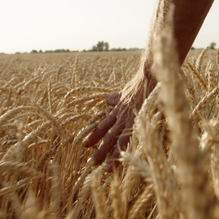 10. Did you know that grains came from wild grasses?
